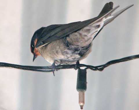 Post image for Verandah birds