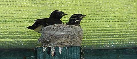 avian-4