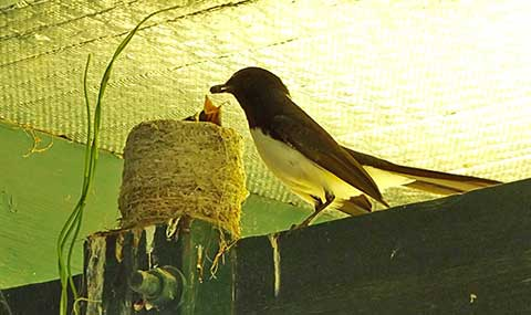Post image for Wagtail babies