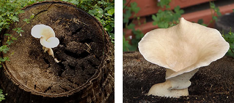 Post image for Post-deluge fungi