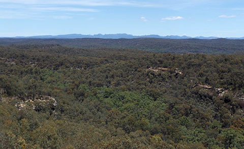 Post image for Passion in the Pilliga